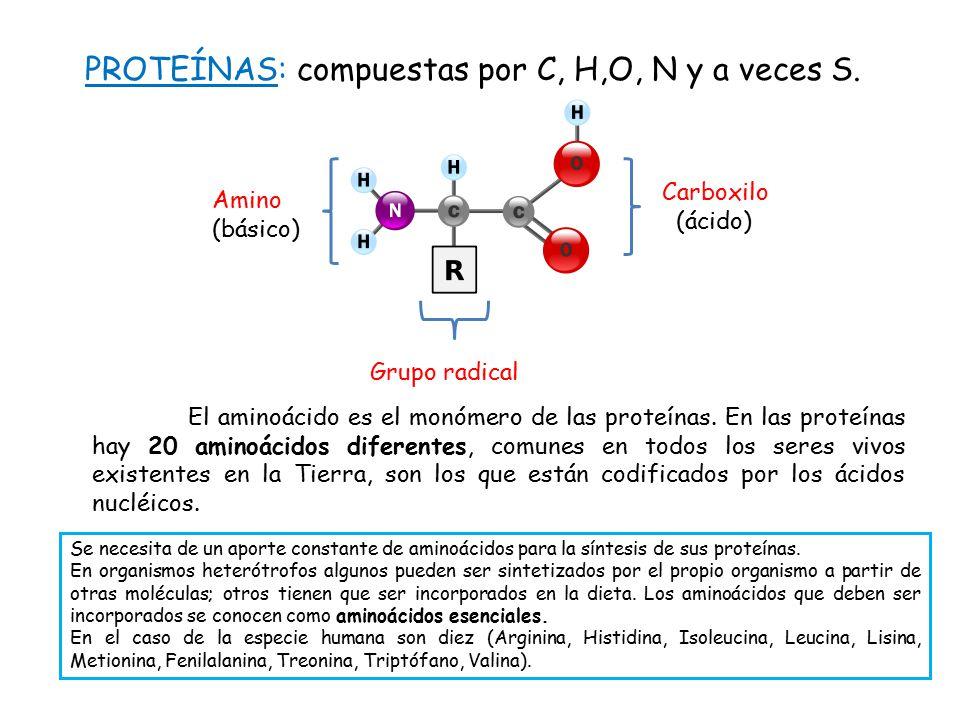 PROTEÍNAS: compuestas por C, H,O, N y a veces S.