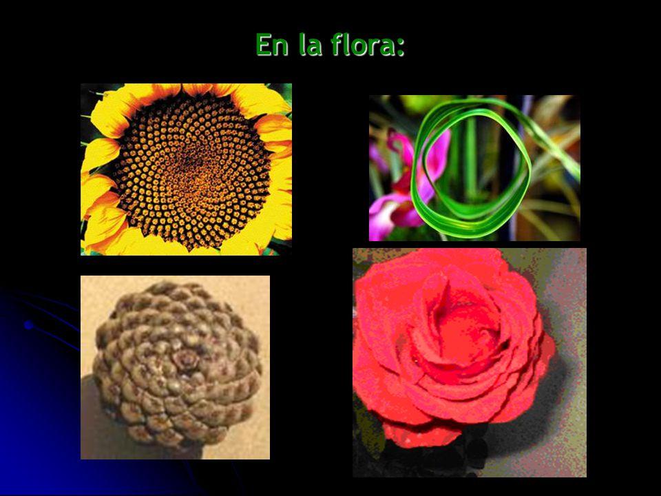 En la flora: