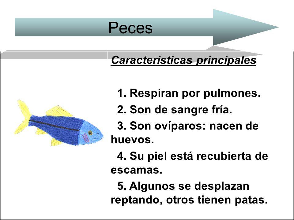 Peces Características principales 1. Respiran por pulmones.