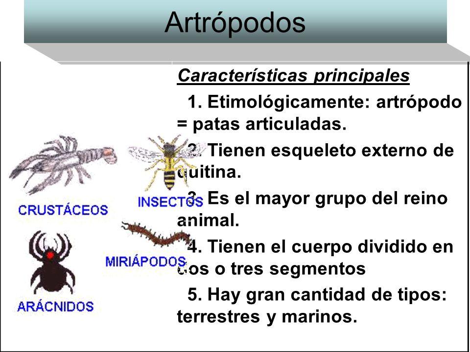 Artrópodos Características principales