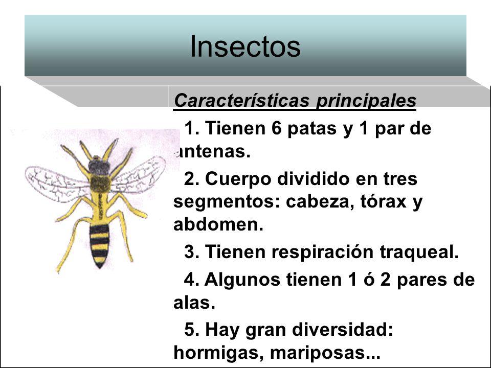 Insectos Características principales