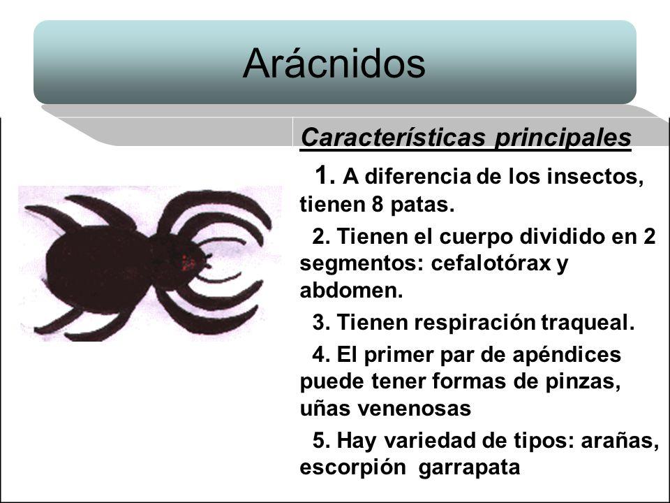 Arácnidos Características principales