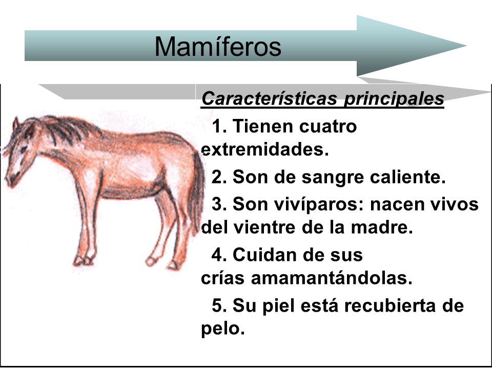 Mamíferos Características principales 1. Tienen cuatro extremidades.