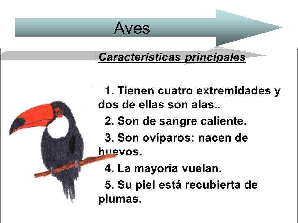 Aves Características principales