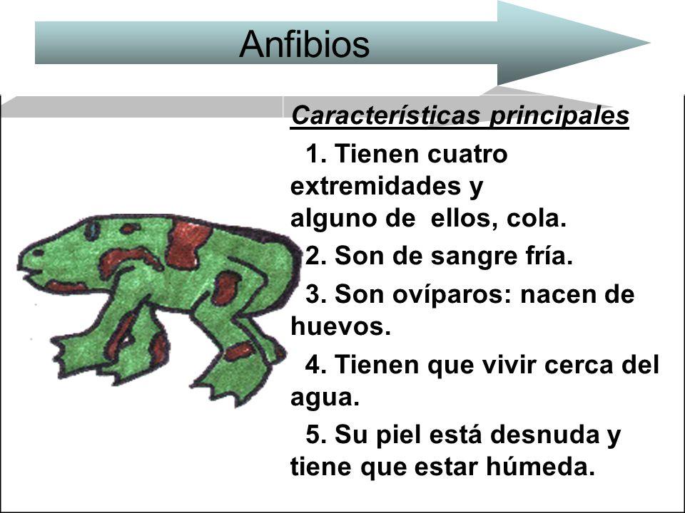 Anfibios Características principales
