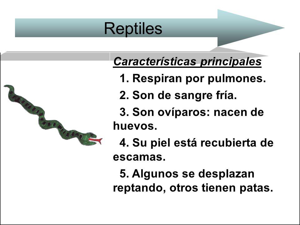 Reptiles Características principales 1. Respiran por pulmones.