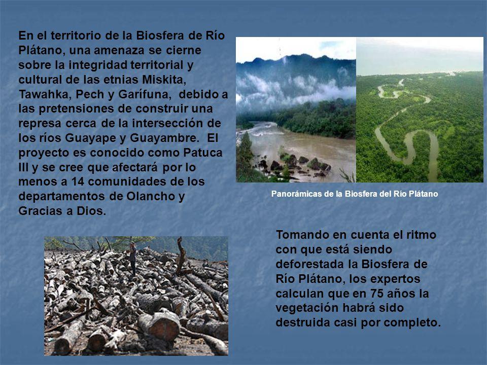 Panorámicas de la Biosfera del Río Plátano