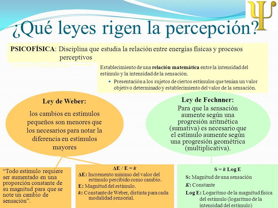 ¿Qué leyes rigen la percepción