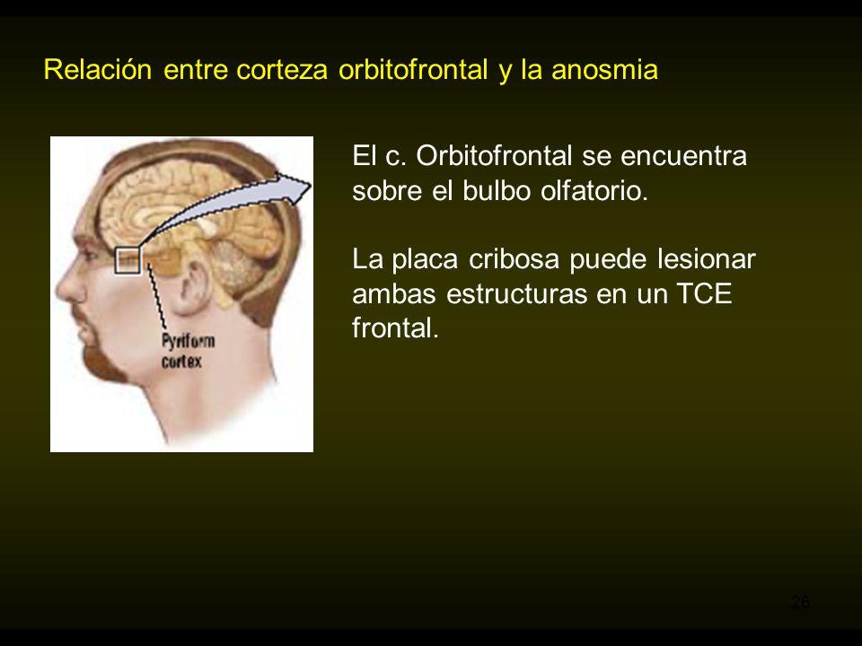 Relación entre corteza orbitofrontal y la anosmia