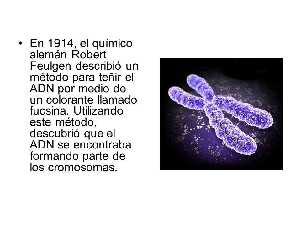 En 1914, el químico alemán Robert Feulgen describió un método para teñir el ADN por medio de un colorante llamado fucsina.