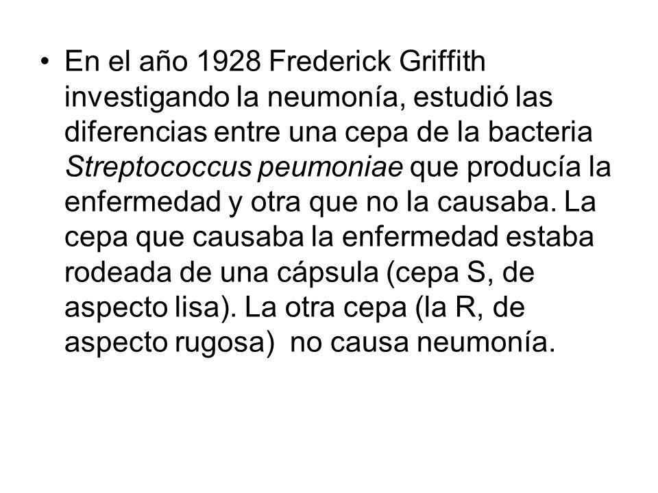 En el año 1928 Frederick Griffith investigando la neumonía, estudió las diferencias entre una cepa de la bacteria Streptococcus peumoniae que producía la enfermedad y otra que no la causaba.