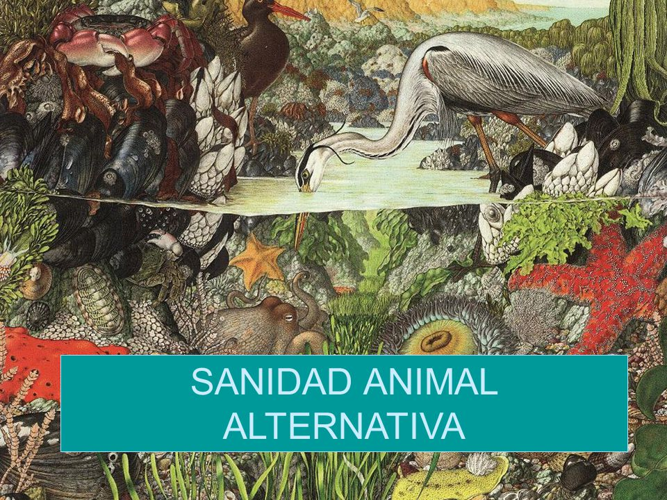 SANIDAD ANIMAL ALTERNATIVA
