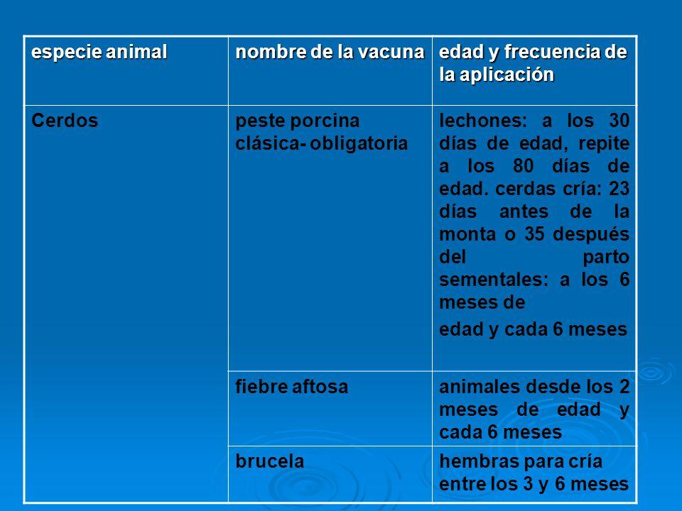 especie animal nombre de la vacuna. edad y frecuencia de la aplicación. Cerdos. peste porcina clásica- obligatoria.