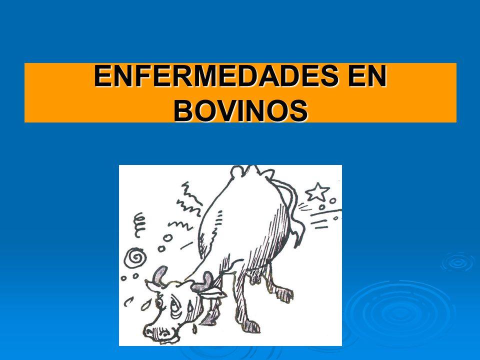 ENFERMEDADES EN BOVINOS