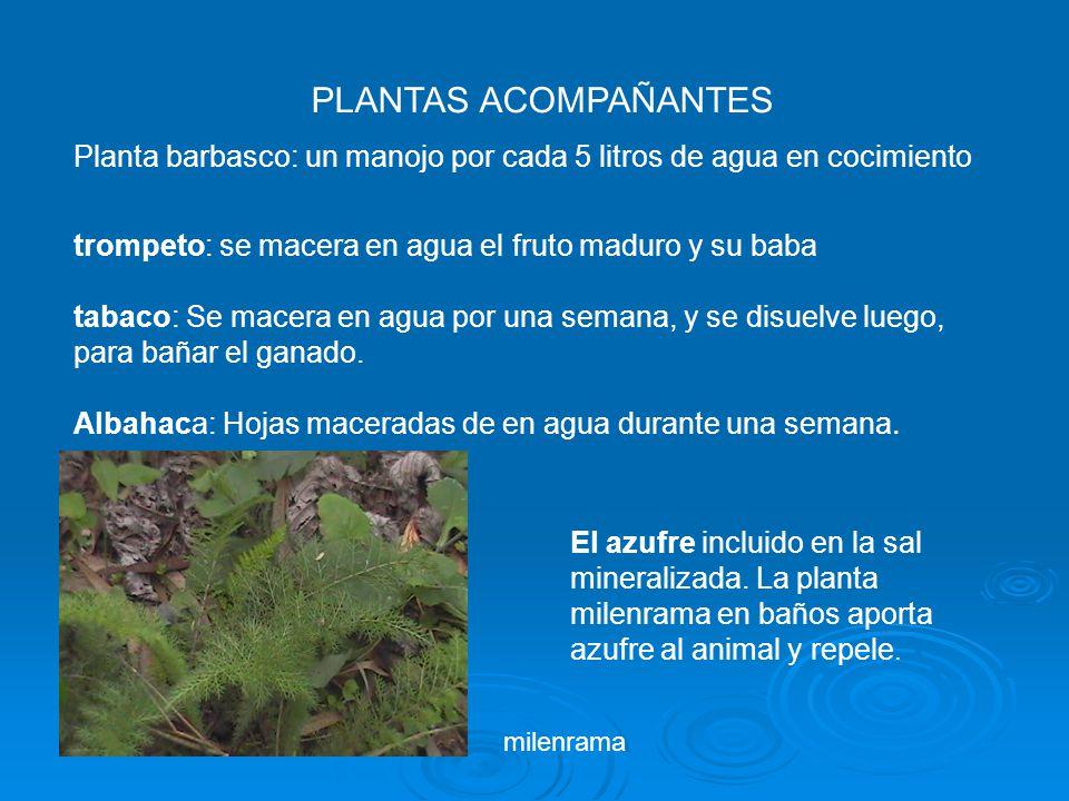 PLANTAS ACOMPAÑANTES Planta barbasco: un manojo por cada 5 litros de agua en cocimiento. trompeto: se macera en agua el fruto maduro y su baba.