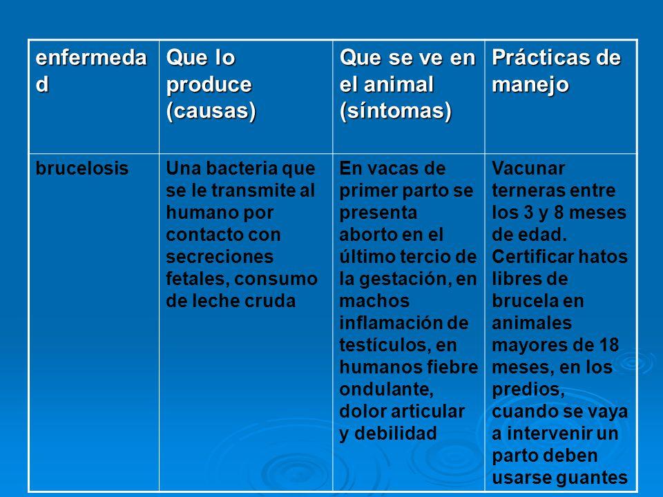 Que lo produce (causas) Que se ve en el animal (síntomas)