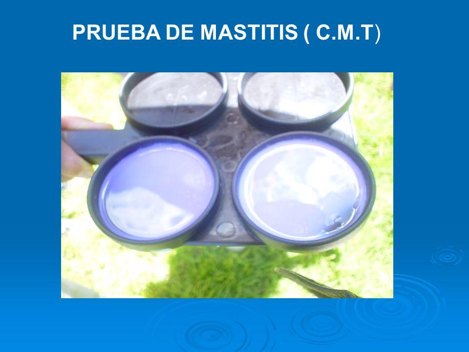 PRUEBA DE MASTITIS ( C.M.T)