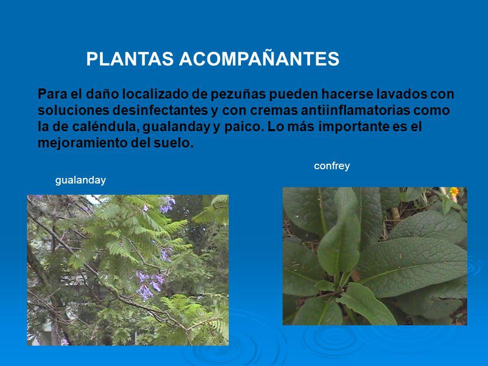 PLANTAS ACOMPAÑANTES