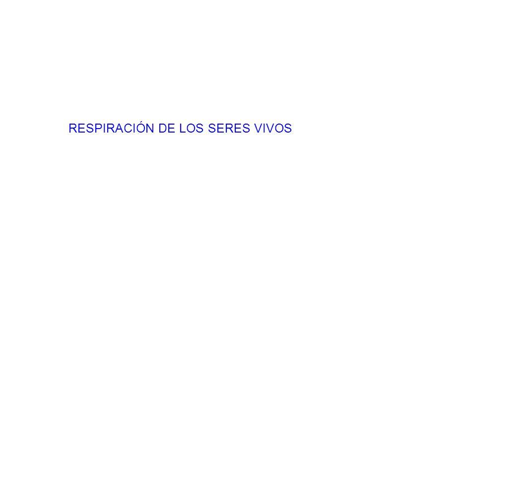 RESPIRACIÓN DE LOS SERES VIVOS