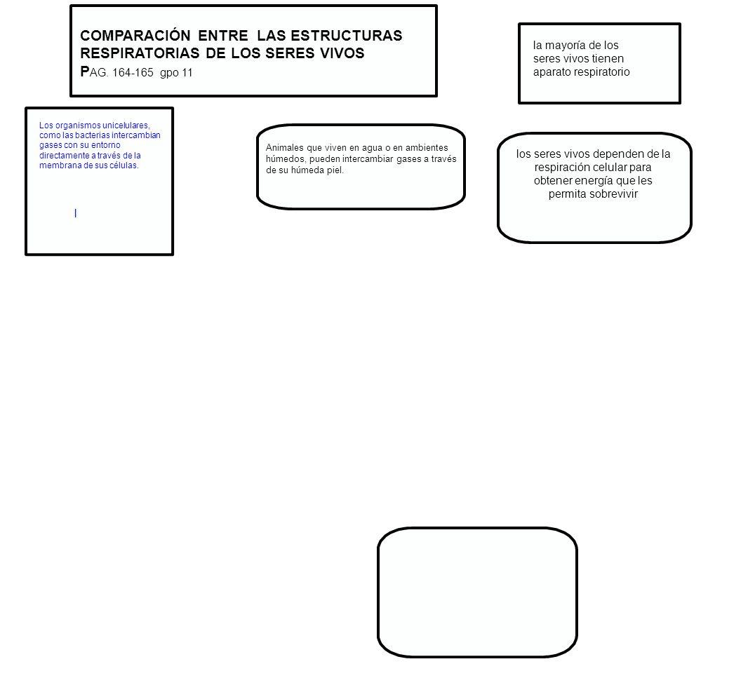 COMPARACIÓN ENTRE LAS ESTRUCTURAS RESPIRATORIAS DE LOS SERES VIVOS