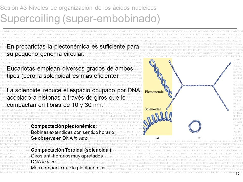 Sesión #3 Niveles de organización de los ácidos nucleicos Supercoiling (super-embobinado)