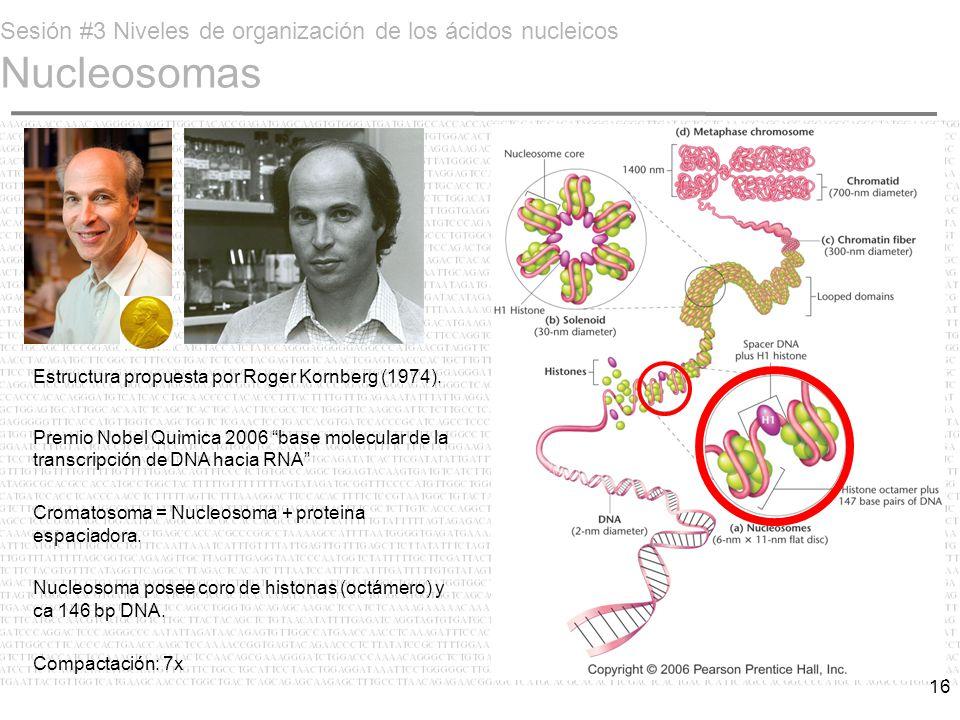 Sesión #3 Niveles de organización de los ácidos nucleicos Nucleosomas