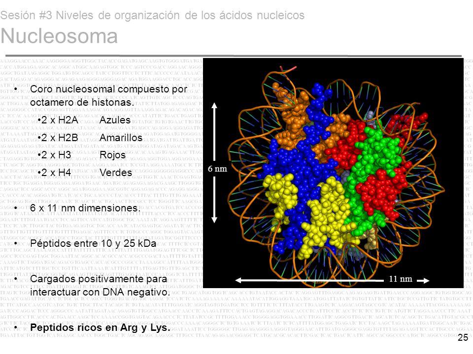 Sesión #3 Niveles de organización de los ácidos nucleicos Nucleosoma