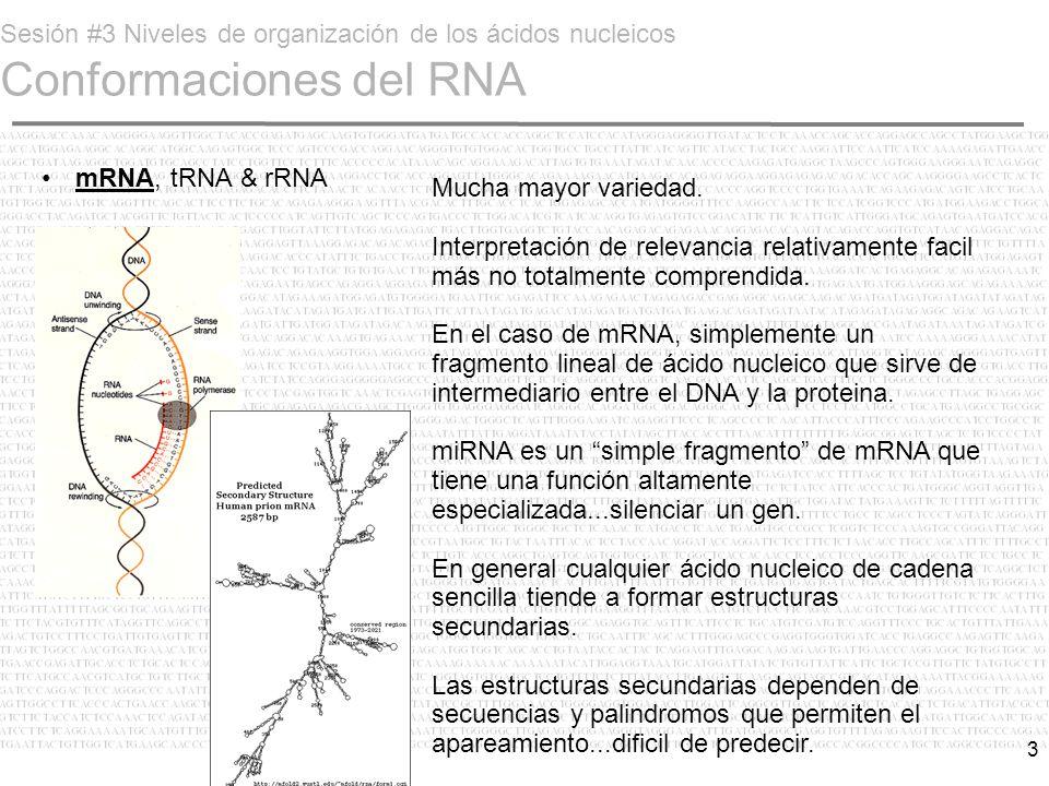 Sesión #3 Niveles de organización de los ácidos nucleicos Conformaciones del RNA
