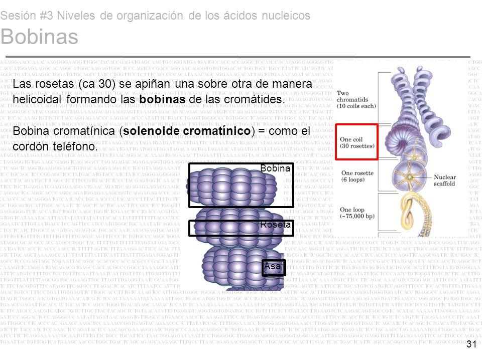 Sesión #3 Niveles de organización de los ácidos nucleicos Bobinas