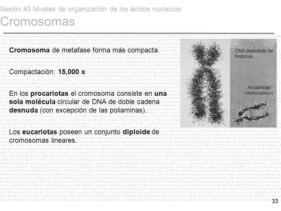 Sesión #3 Niveles de organización de los ácidos nucleicos Cromosomas