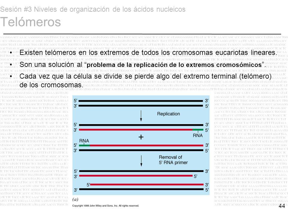 Sesión #3 Niveles de organización de los ácidos nucleicos Telómeros