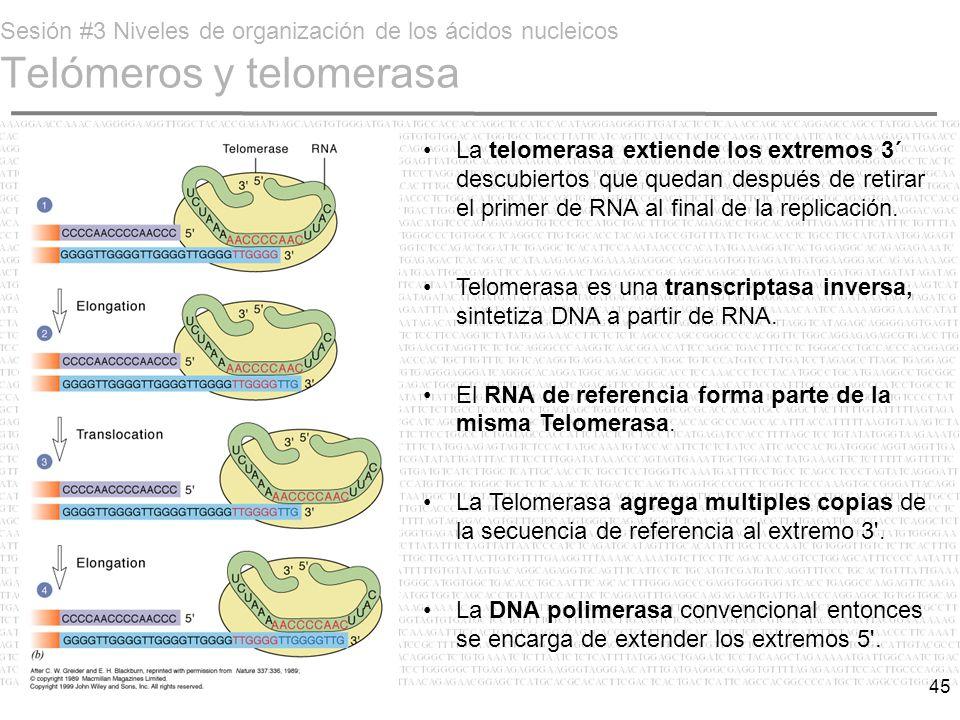 Sesión #3 Niveles de organización de los ácidos nucleicos Telómeros y telomerasa