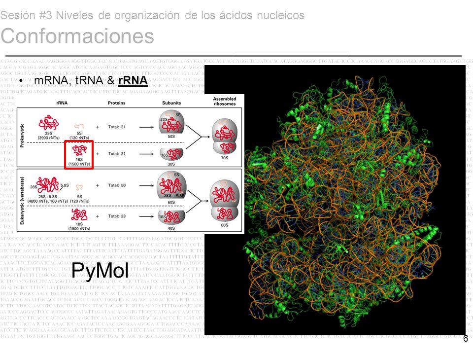 Sesión #3 Niveles de organización de los ácidos nucleicos Conformaciones