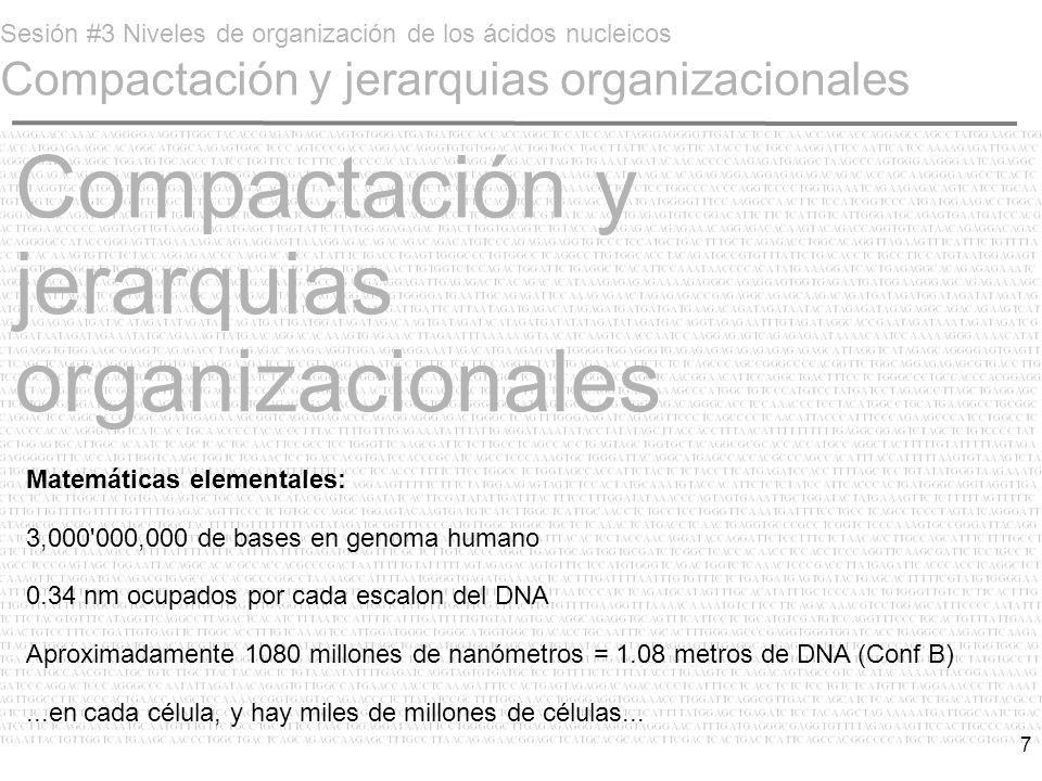 Compactación y jerarquias organizacionales