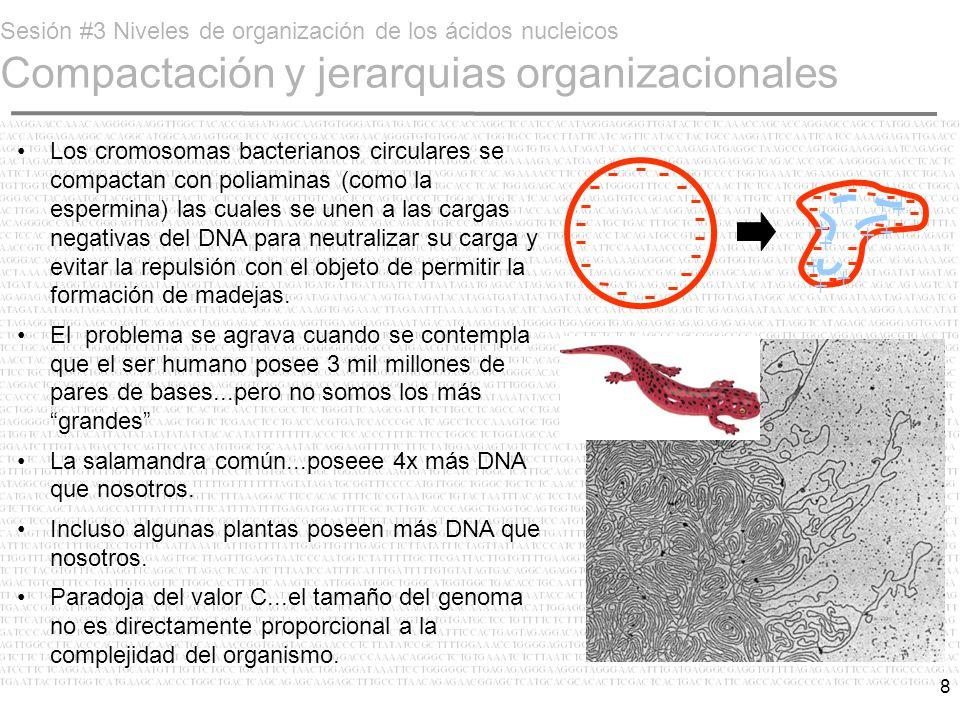 Sesión #3 Niveles de organización de los ácidos nucleicos Compactación y jerarquias organizacionales