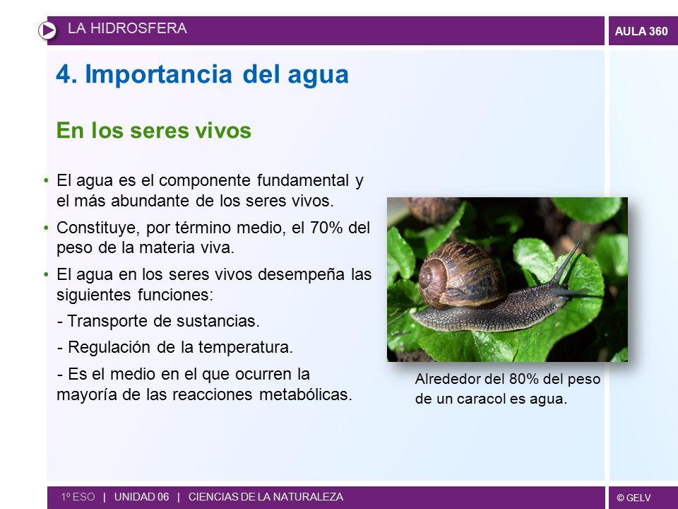 4. Importancia del agua En los seres vivos