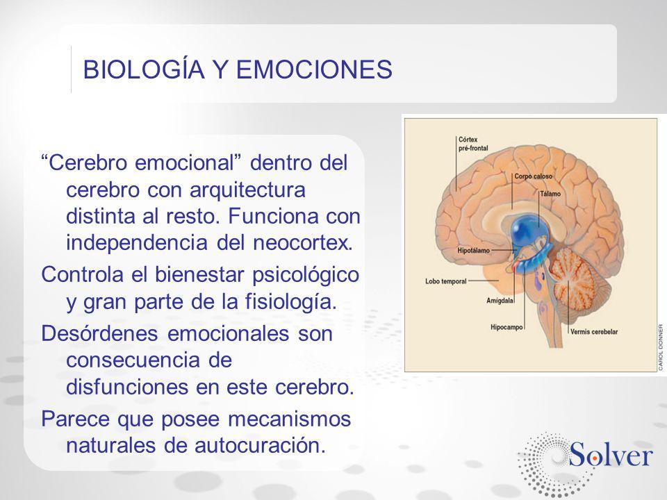 BIOLOGÍA Y EMOCIONES Cerebro emocional dentro del cerebro con arquitectura distinta al resto. Funciona con independencia del neocortex.