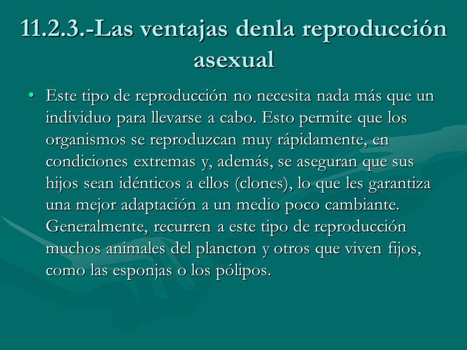 11.2.3.-Las ventajas denla reproducción asexual