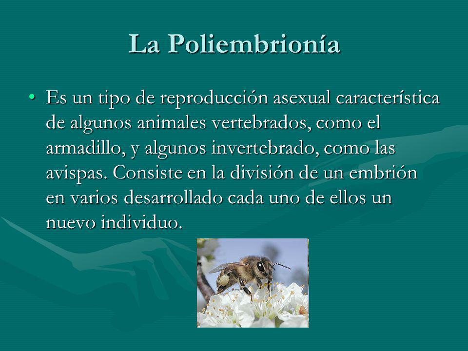 La Poliembrionía