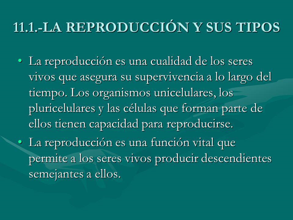 11.1.-LA REPRODUCCIÓN Y SUS TIPOS