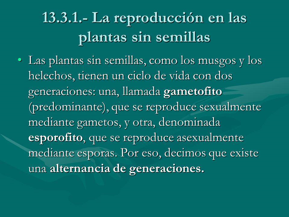 13.3.1.- La reproducción en las plantas sin semillas