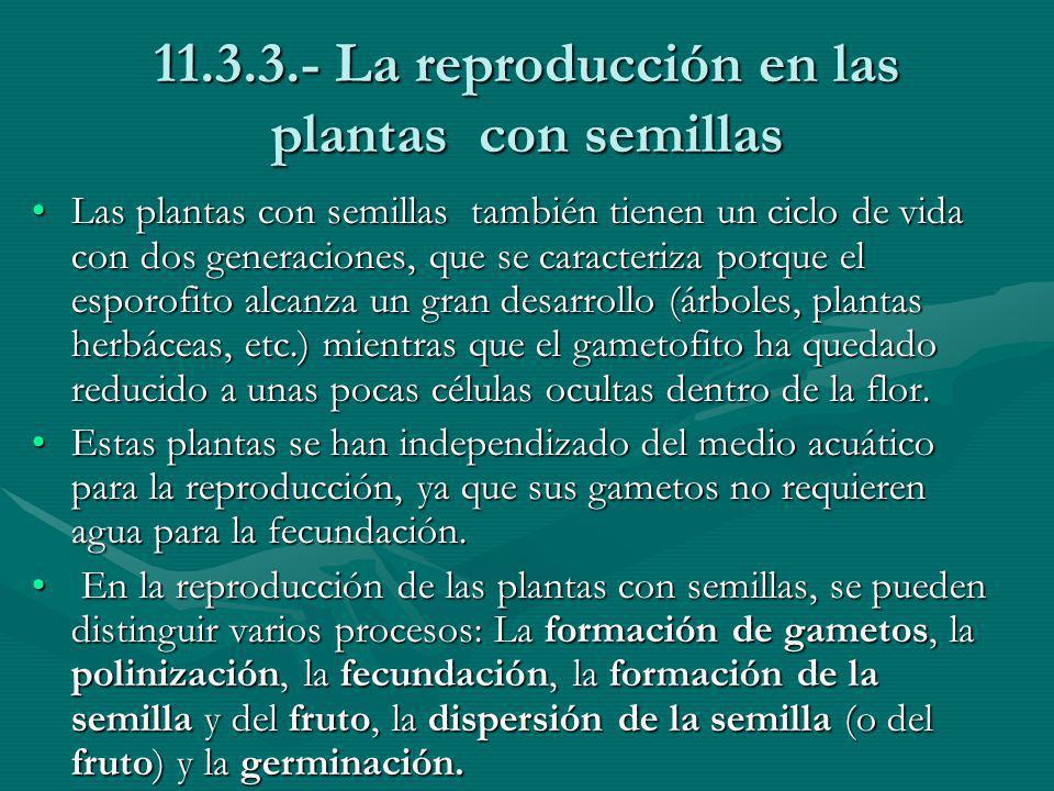 11.3.3.- La reproducción en las plantas con semillas