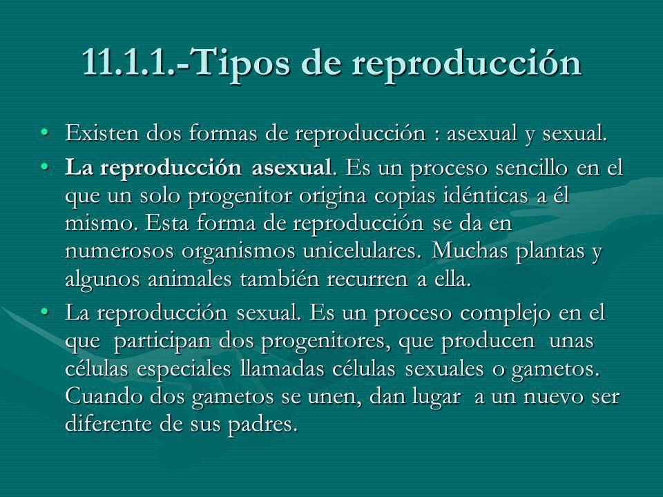 11.1.1.-Tipos de reproducción