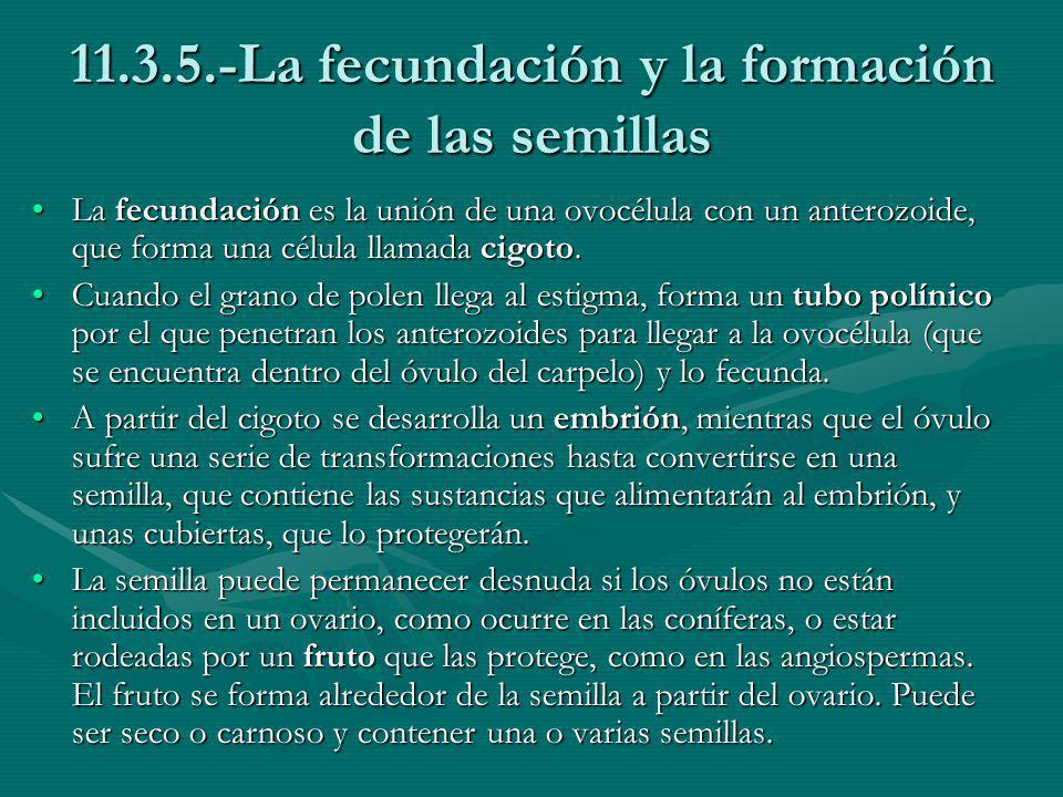 11.3.5.-La fecundación y la formación de las semillas