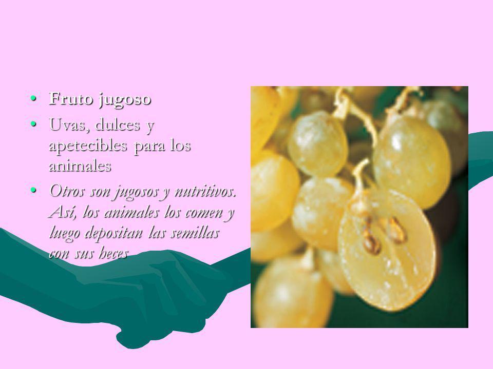 Fruto jugoso Uvas, dulces y apetecibles para los animales.