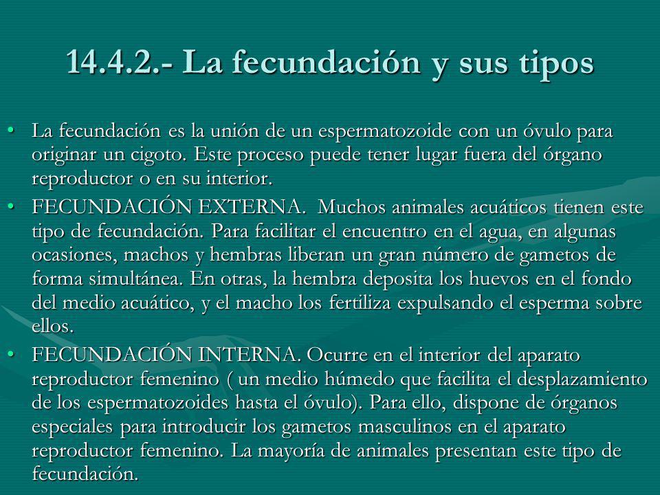 14.4.2.- La fecundación y sus tipos