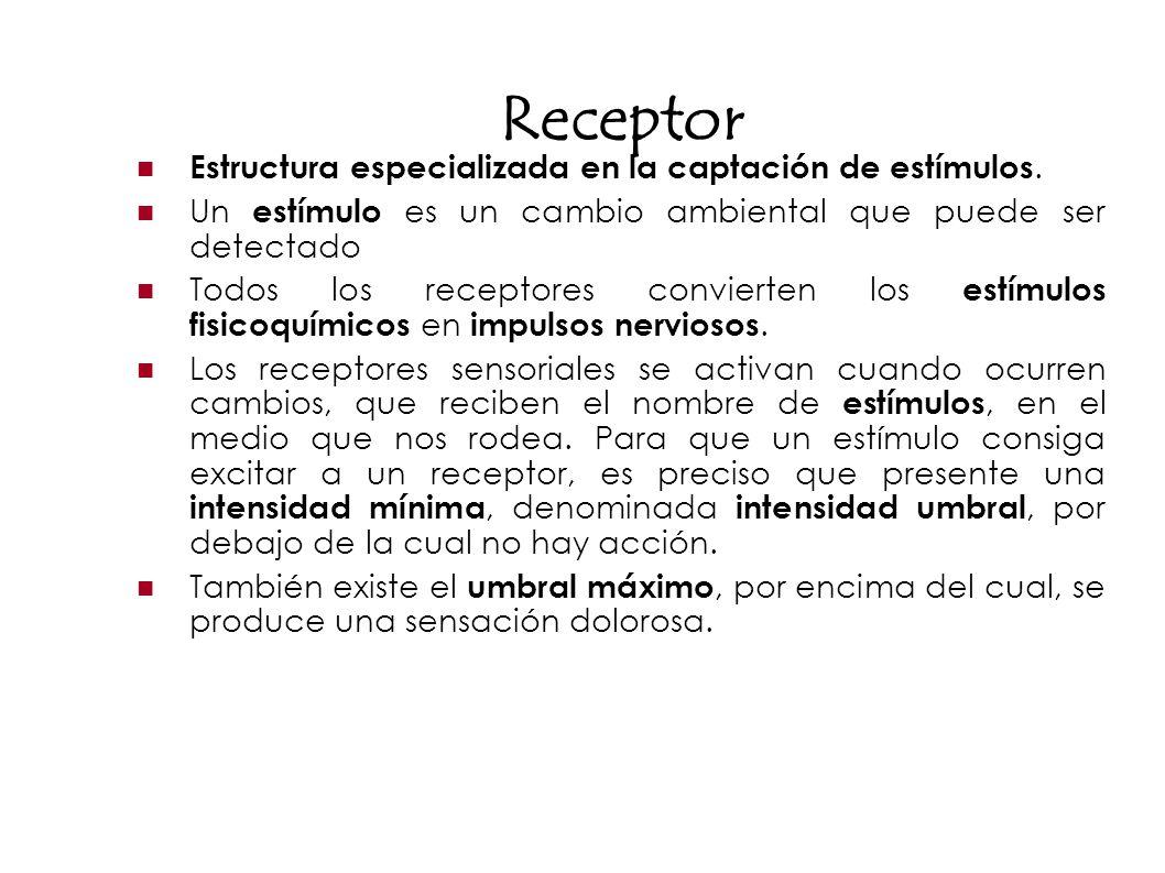Receptor Estructura especializada en la captación de estímulos.