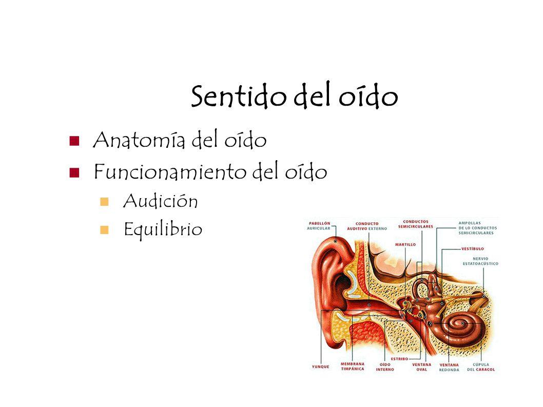 Sentido del oído Anatomía del oído Funcionamiento del oído Audición