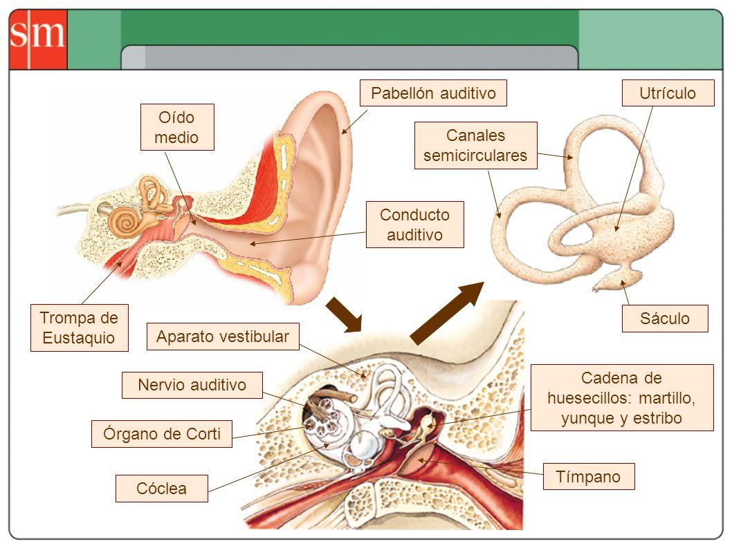 Canales semicirculares