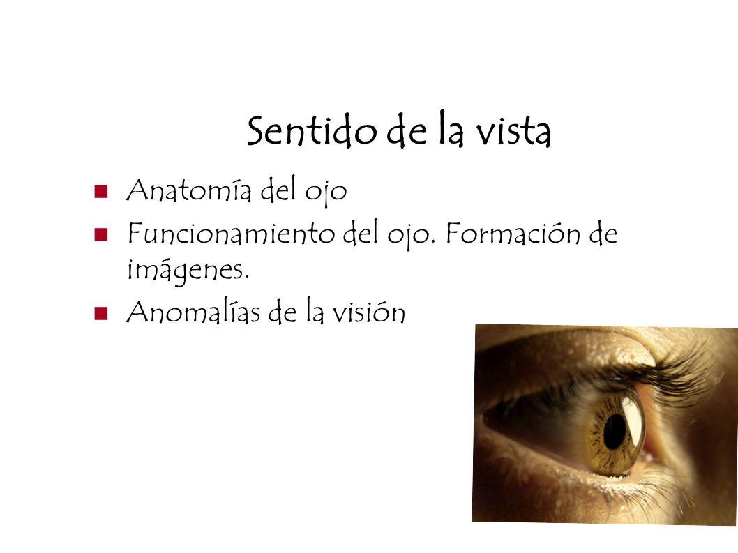 Sentido de la vista Anatomía del ojo